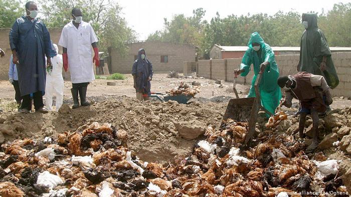 Avian flu outbreaks europe, russia, israel, south korea